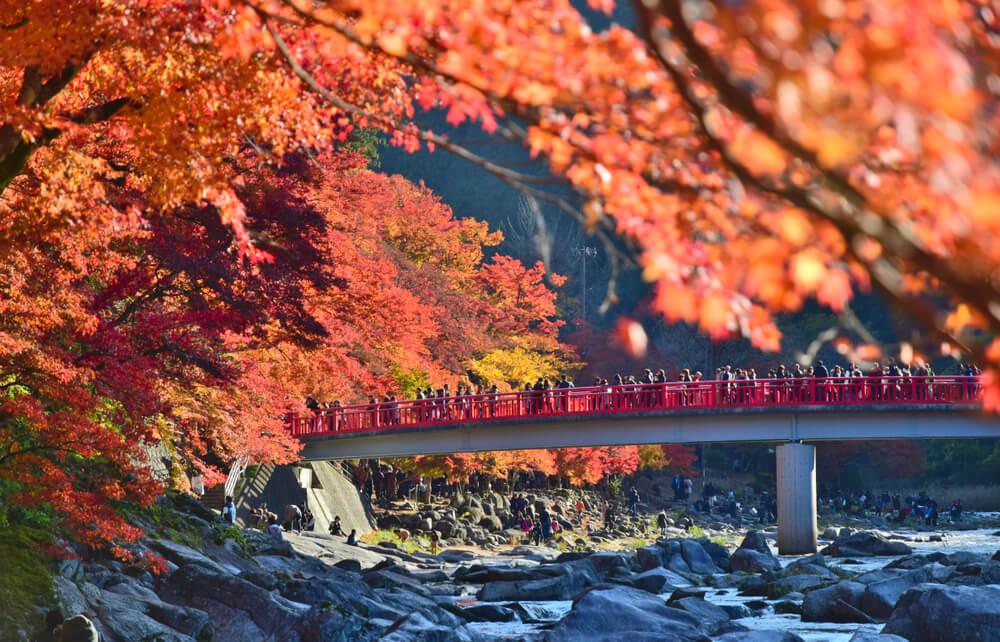 Japan, bridge, autumn, japan travel